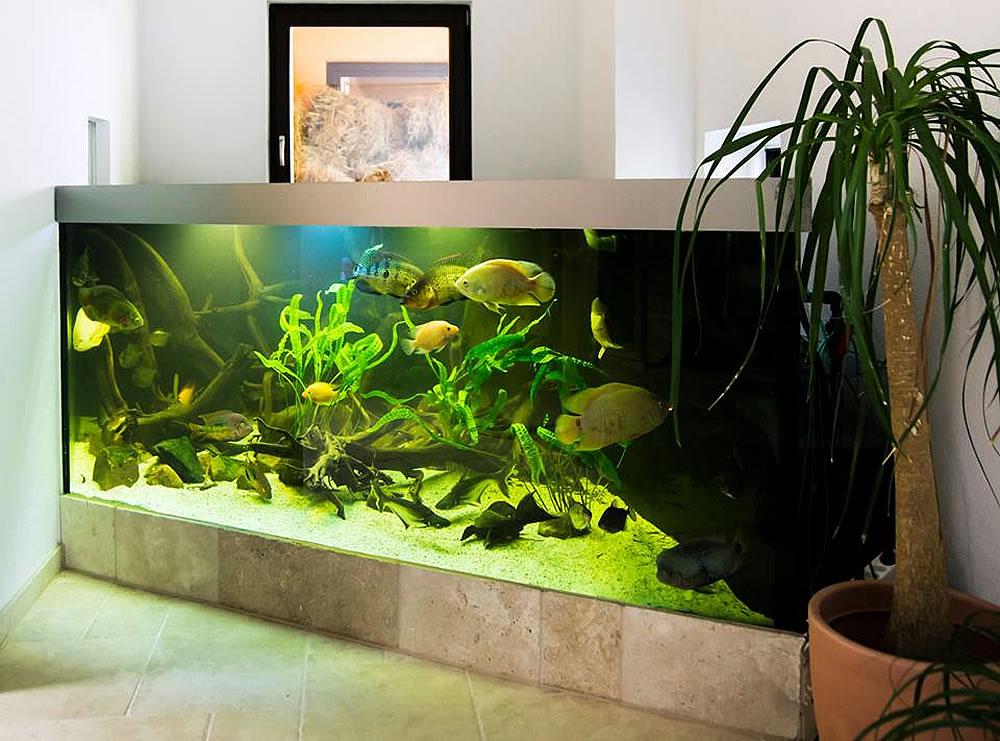 wir gestalten ihr indiv wunschbecken aquariumbau ennigerloh aquarien und terrarien. Black Bedroom Furniture Sets. Home Design Ideas